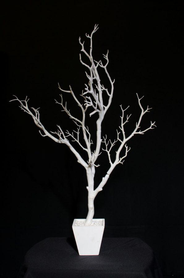 White Tree-0