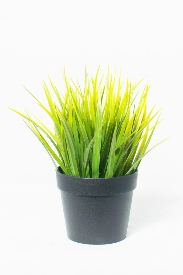 Cymidium Grass Arrangement Small-0